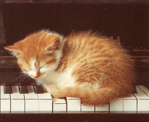 kitty-on-the-keys.jpg