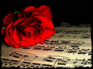 roses-181.jpg