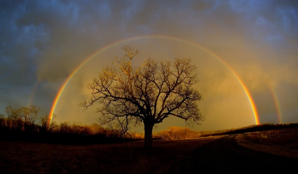 rainbow_elam_3.jpg