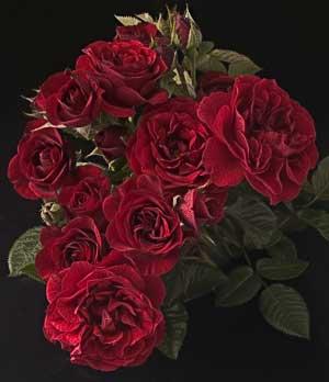 gene_sasse_valentines_day.jpg