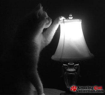 lightbulb-curiosity